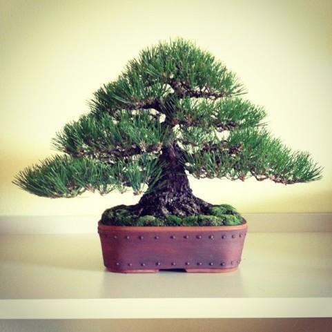 Bjorn Styled Tree